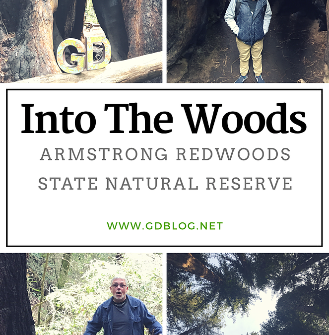 Into The Woods – Armstrong Redwoods State Natural Reserve